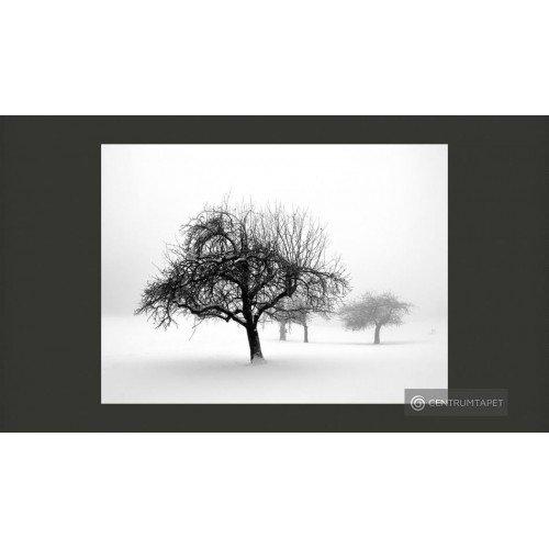 Fototapeta Zima - drzewa...