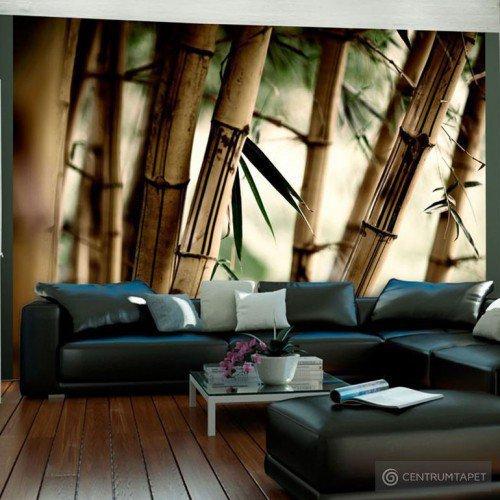 Fototapeta Fog and bamboo forest 100403-35