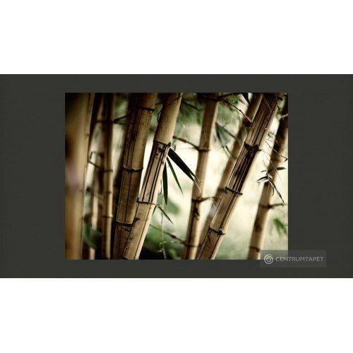 Fototapeta Fog and bamboo...