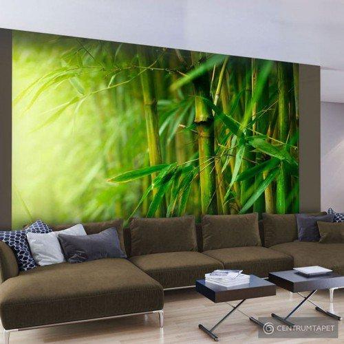 Fototapeta Bambus 100403-56