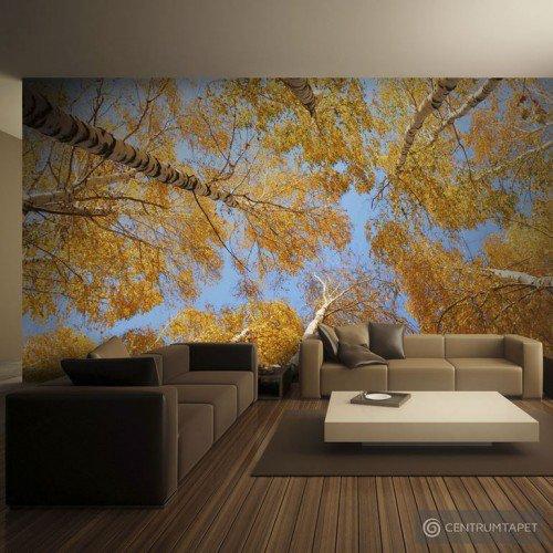 Fototapeta Jesienne korony drzew 100403-68