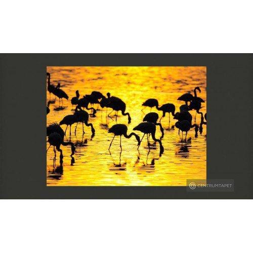 Fototapeta Kenia - flamingi...