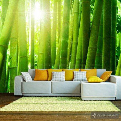 Fototapeta Słońce i bambus 100403-89