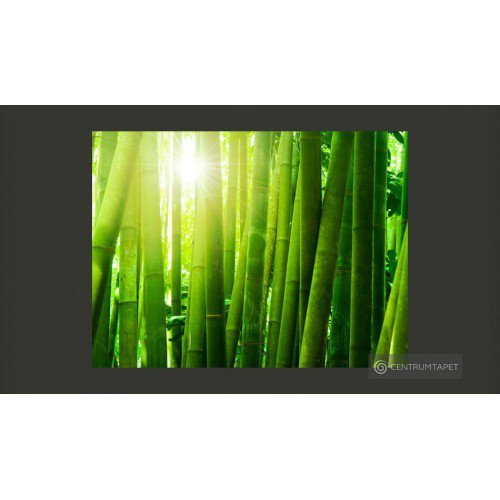 Fototapeta Słońce i bambus...