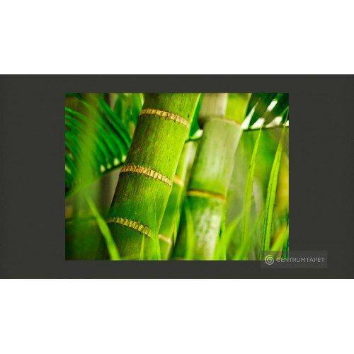 Fototapeta Bambus - detal...