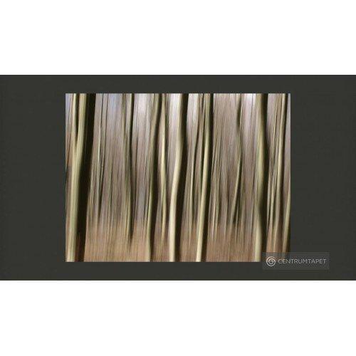 Fototapeta Forest 100405-50