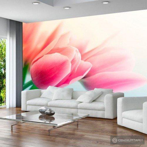 Fototapeta Wiosna i tulipany 100406-118