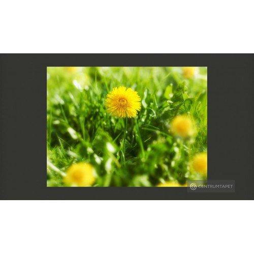 Fototapeta Żółty kwiatowy...