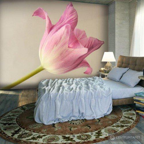 Fototapeta Pink tulip 100406-131
