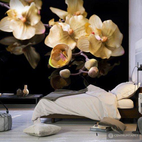 Fototapeta Orchids in ecru color 100406-143