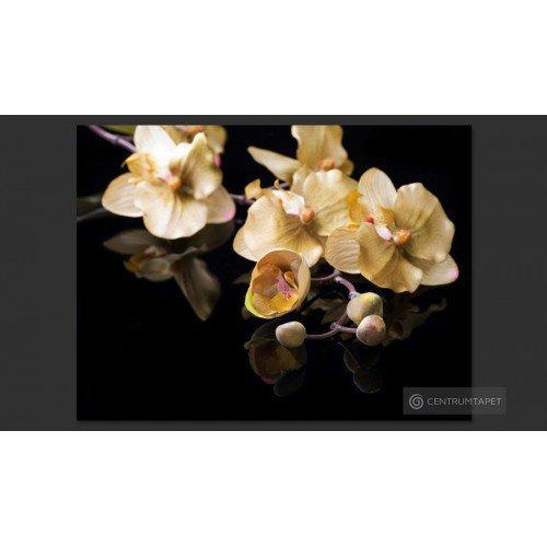 Fototapeta Orchids in ecru...