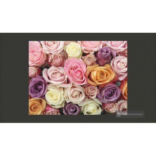 Fototapeta Pastelowe róże...