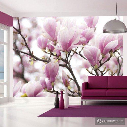 Fototapeta Gałązka kwitnącej magnolii 100406-26