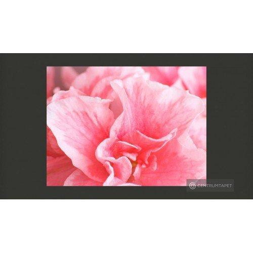 Fototapeta Różowe kwiaty...