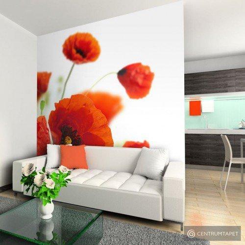 Fototapeta Poppies on the wihite background 100406-64