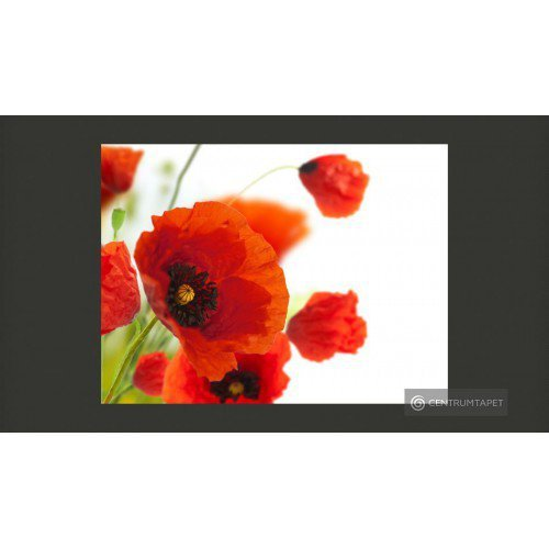 Fototapeta Poppies on the...