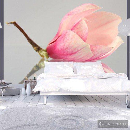 Fototapeta Samotny kwiat magnolii 100406-69