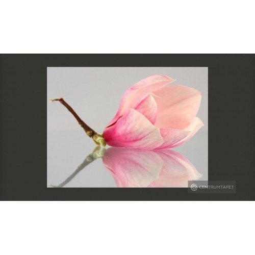 Fototapeta Samotny kwiat...