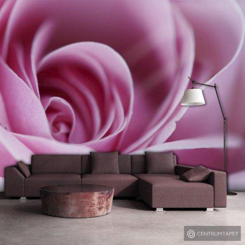 Fototapeta Różowa róża 100406-7