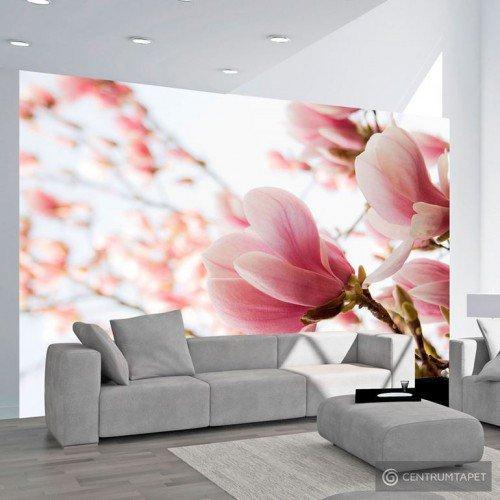 Fototapeta Różowa magnolia 100406-91