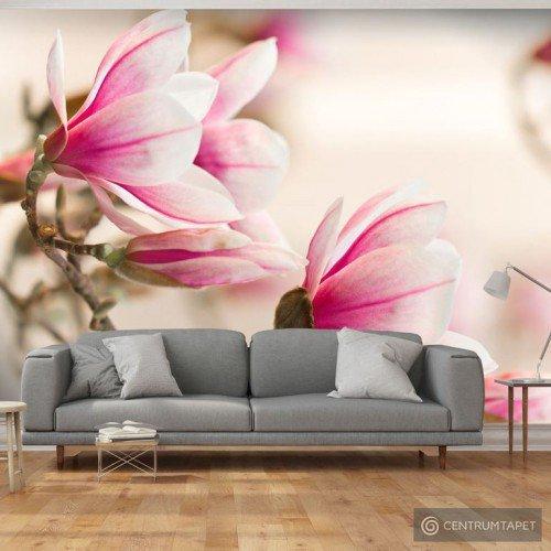 Fototapeta Branch of magnolia tree 100406-92