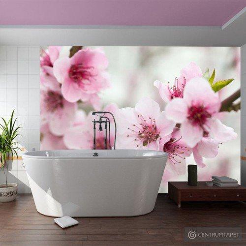 Fototapeta Kwitnąca wiśnia - różowe kwiatuszki 100406-93