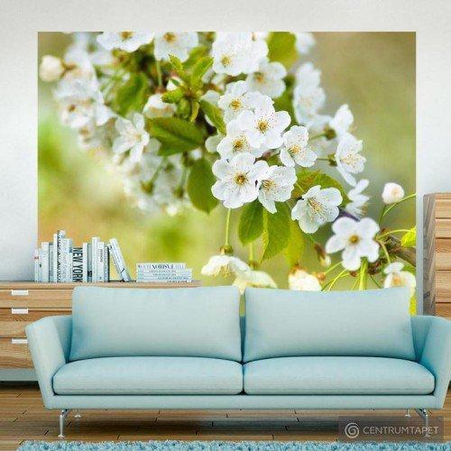 Fototapeta Delikatne kwiaty wiśni 100406-94