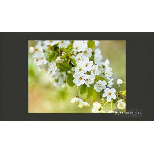 Fototapeta Delikatne kwiaty...