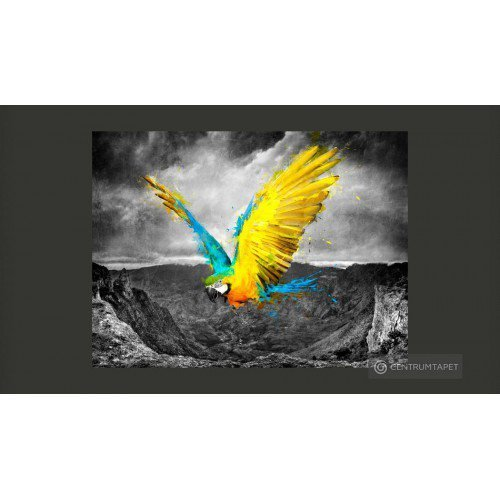 Fototapeta Exotic parrot...