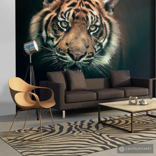 Fototapeta Tygrys bengalski 10040903-5