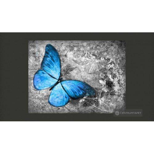 Fototapeta Blue butterfly...