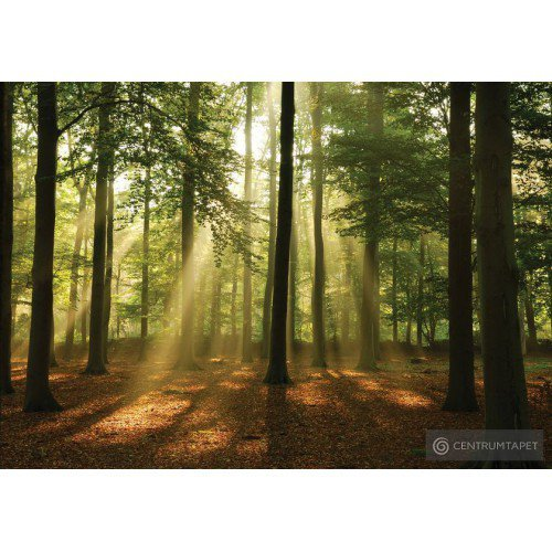 Fototapeta 10331 Spacer w lesie