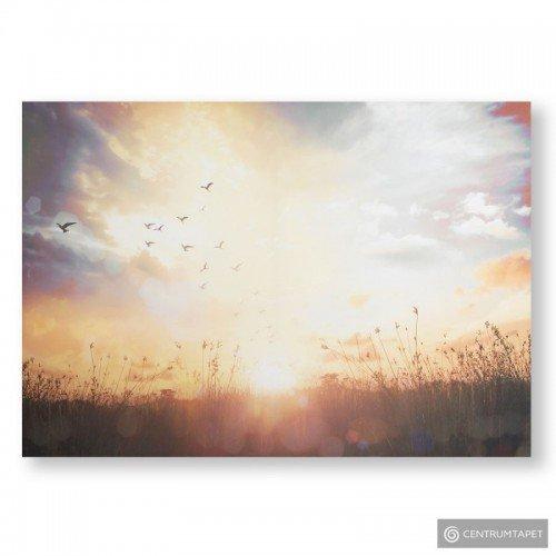 Obraz 105890 Łąka o zachodzie słońca Graham&Brown