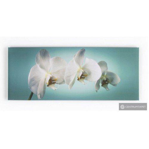 Obraz 40-615 Orchidea...