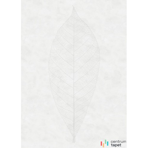 Fototapeta R2-012 Decent Leaf