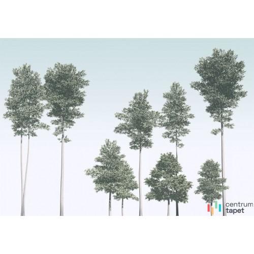 Fototapeta R4-040 Pines