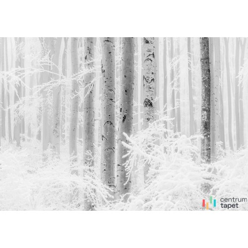 Fototapeta R4-043 Winter Wood