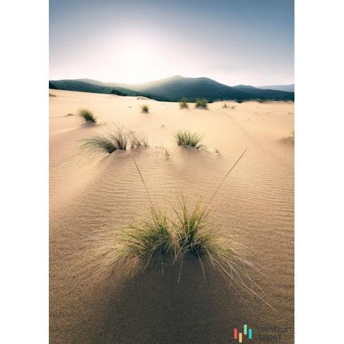 Fototapeta SHX4-091 Vivid Dunes