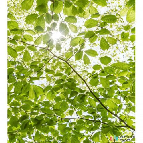 Fototapeta SHX5-045 Im Frühlingswald
