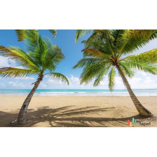 Fototapeta SHX9-014 Caribbean Days II