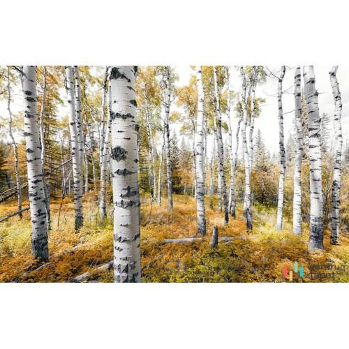 Fototapeta SHX9-015 Colorful Aspenwoods