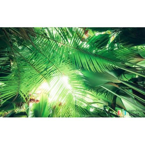 Fototapeta SHX9-025 Dschungeldach