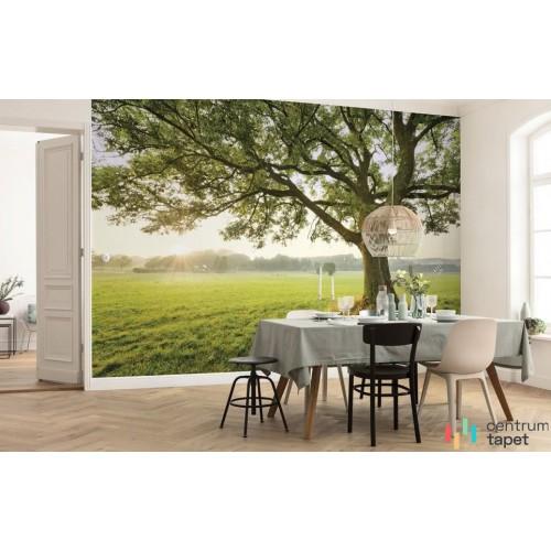 Fototapeta SHX9-086 The Magic Tree