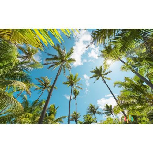 Fototapeta SHX9-108 Coconut Heaven