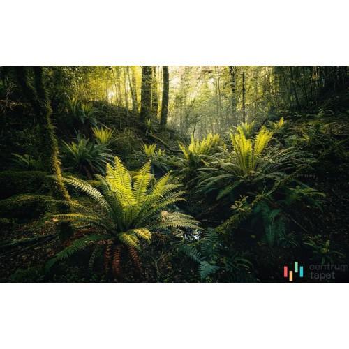 Fototapeta SHX9-110 Fjordland Woods