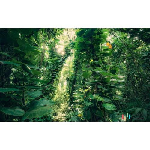Fototapeta SHX9-114 Green Leaves