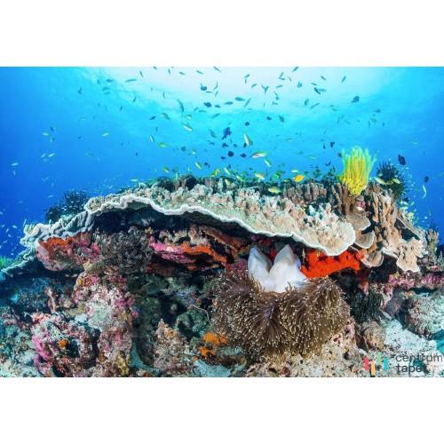 Fototapeta IANGX8-021 Coral Reef