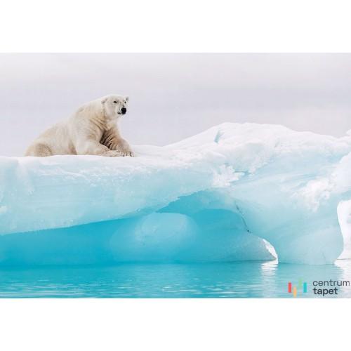 Fototapeta IANGX8-026 Arctic Polar Bear