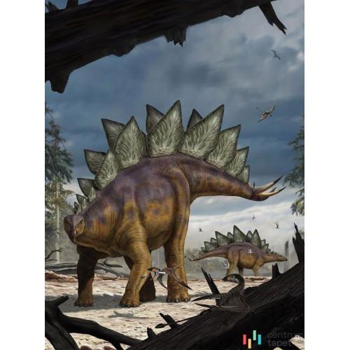 Fototapeta XXL2-530 Stegosaurus